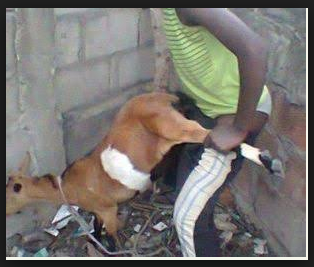 Teenager caught having s*x with goat