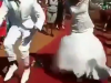 This Kenyan Couple Entry Dance At Their Wedding